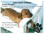 Study Puppy Therapy